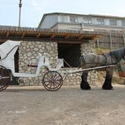 Прокат, аренда фаэтона для свадьбы фото