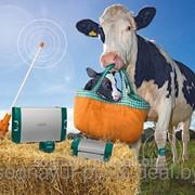 Идентификация CowScout S фото