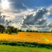 Земельный участок сельхозназначения площадью 90 ГА фото