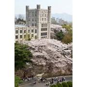 Языковые курсы в Университете Кёнхи фото