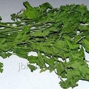Зелень сушеный фото