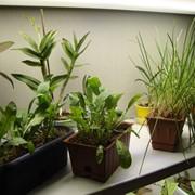 Светильник для агропромышленного комплекса - растениеводства фото