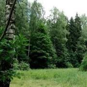 Защита леса, лечение, оздоровление лесных насаждений фото
