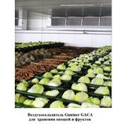 Овощехранилища. Холодильные и морозильные камеры. фото