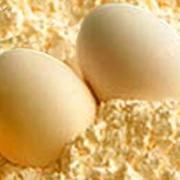 Порошок сухой яичный фото