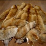 Шкуры натуральные. Шкуры лисы фото