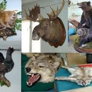 Чучела животных фото