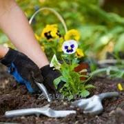 Садоводство защита растений фото