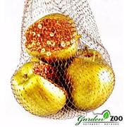 Яблоки золотые 10см фото