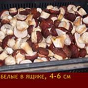 Грибы белые замороженные, 4-6 см, 1-ый сорт фото