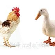 Витаминно-минеральная пищевая добавка для собак, кошек, грызунов и птиц фото