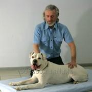 Профессиональный массаж животных фото