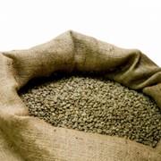 Кофе зеленый Арабика Бразилия (Scr.16 up Fazenda Rainha) фото