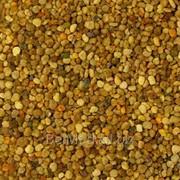 Пыльца цветочная 100 гр фото