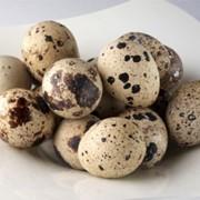 Яйца перепелиные от производителя Яковенко, ЧП ( Херсонская область, Белозерка) фото