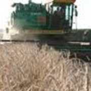 Купля-продажа сельскохозяйственных предприятий фото