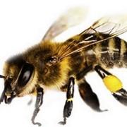 Препарат противогрибковый для пчел фото
