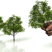 Озеленение,снос деревьев,санитарная обрезка фото