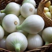 Лук салатный фото