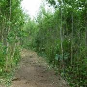 Уничтожение кустарниковой растительности с применением мульчеров (лесных фрез) фото