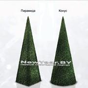 Елки «Пирамида» и « Конус» фото