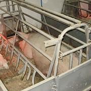 Оборудование для выращивания и содержания свиней фото