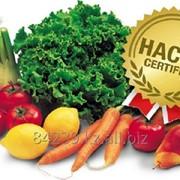 Сертификат Хассп в Алматы фото