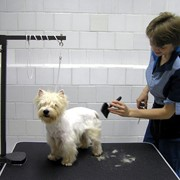 Салон-парикмахерская для животных фото