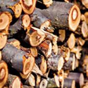Заготовка и продажа дров фото