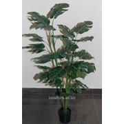 """Растение искусственное """"Монстера в горшке"""" 1,2м AН14549 фото"""