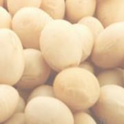 Полножирная экструдированная соя (ПЭС) фото