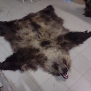 Медведь бурый ковер фото