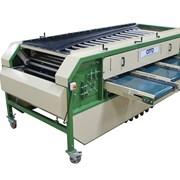 оборудование для калибровки картофеля, овощей, лук фото