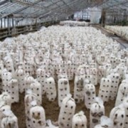 Оборудование от производителя для выращивания грибов фото