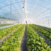 Профессиональная тепличная пленка 12m 200мкм / 50м.п. / 115кг / 36-60 UV EVA LD AF фото