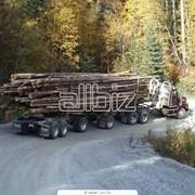 Перевезення лісовозом, ПП Гриців фото