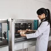 Факультет пищевых производств фото