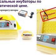 Инкубатор для яиц автоматический И48-3 фото