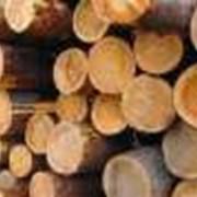 Лес строительный граб, дуб, сосна фото