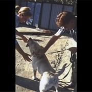 Общий курс дрессировки собак фото