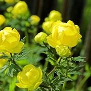 Подбор растений для сада фото
