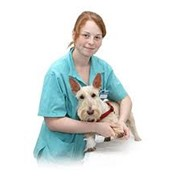 Скорая ветеринарная помощь, Общие и профилактические ветеринарные мероприятия фото