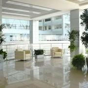 Уход за растениями дома и в офисах,ресторанах, гостиницах фото