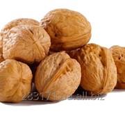 Целый грецкий орех фото