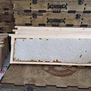Мёд в сотах липовый фото