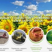 Аммиак- хорошее удобрение для картофеля, свеклы, зерновых и овощных культур, многолетних трав. фото