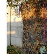 Сетка маскировочная (расцветка:дубок, покрой: жабо) фото