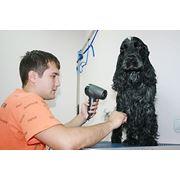 Зоопарикмахерская для собак и кошек фото