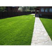 Озеленение и элитный газон фото