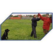 Дрессировка и воспитание собак Подготовка собак для охраны объектов и личной охраны фото